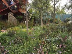 Trailfinders Australian garden presented by Flemings Chelsea Flower Show 2013 Designer Phillip Johnson