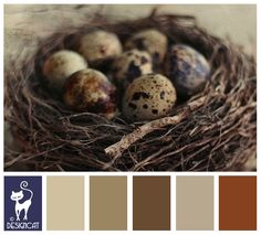 Bird eggs - Navy, brown, Beige, Sand, Coffee, Chocolate - Designcat Colour Inspiration Board