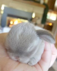 These little bunnies are guaranteed to make you squeal! So precious and delicate! @ cute animals # bunnies # cute bunnies photos # cute animal photos cutest baby animals 19 Super Tiny Bunnies That Will Melt The Frost Off Your Heart Baby Animals Super Cute, Cute Baby Bunnies, Cute Little Animals, Cute Funny Animals, Cutest Bunnies, Tiny Baby Animals, Baby Pets, Little Pets, Baby Animals Pictures