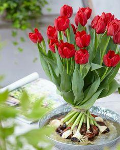 Bulb Bouquet. com