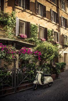 italian poppies : Photo