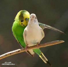 Super parakeet!          ______       /             \       \    SP     /         \_____/