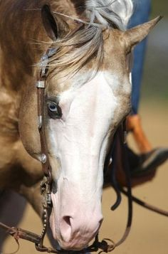 Big Chex To Cash- Silver Spurs Equine Love that face...