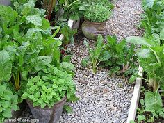 Go Green To Save Money - Growing Your Own Fresh Herbs (1) by Farmgirl Susan, via Flickr