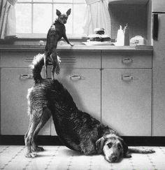 Synergy Teamwork