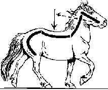 icElandic horse outline - Google Search