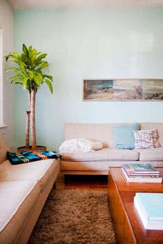 15 Awesome Indoor Trees for Arbor Day | Apartment Therapy - Pendleton saddle blanket on sofa