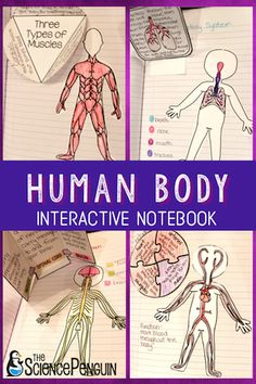 Human Body Interactive Notebook for upper elementary $| The Science Penguin