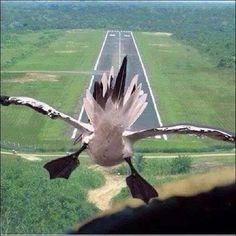 #Flying #Funny #Landing