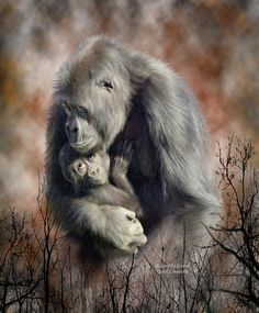 Browse through images in Carol Cavalaris' Primates - Spirit Of The Wild collection. A collection of art that pays tribute to the magnificent primates who are so like us. Baby Animals, Cute Animals, Wild Animals, Silverback Gorilla, Creation Photo, Mundo Animal, Illustrations, Animals Of The World, Fauna