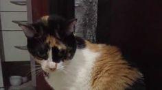 Cute cats feel - Funny Cats - brincadeiras com filhote #5  || CANAL DA J...