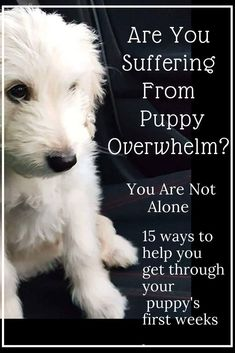 Surviving Puppy Overwhelm, 15 Lifesaving Tips To Help You Is it normal to feel completely overwhelmed by your new puppy? Are you suffering from Puppy Overwhelm Here is 15 tips to help you survive the first few weeks after bringing your puppy home Puppy Training Tips, Crate Training, Training Your Dog, Potty Training, Agility Training, Toilet Training, Training Videos, Training Plan, Dog Minding