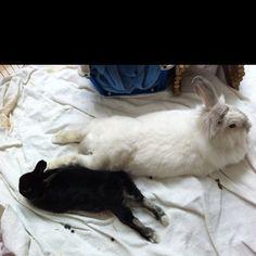 My lounge rabbits...