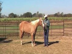 Teaching a Horse to Turn for Showmanship, provided by eXtension - YouTube