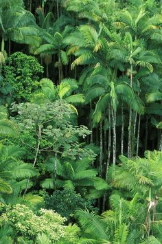 Lush Rainforest Photograph - Lush Rainforest Fine Art Print
