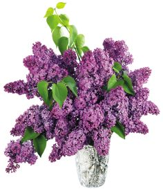 Vase with Purple Lilac PNG Clipart Picture
