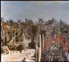 Desert garden, general view, circa 1924. :: Huntington History