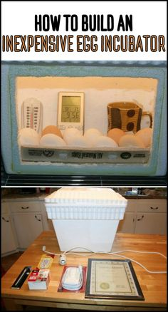 Hatch your own chicks by making a cheap egg incubator from styrofoam!