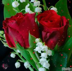 Flowers Gif, Exotic Flowers, Happy Birthday Images, Happy Birthday Greetings, Beautiful Red Roses, Beautiful Flowers, Rosas Gif, Good Morning Cards, Animated Heart
