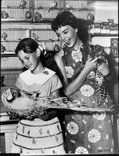 1956 Natalie Wood - Actress Press Photo