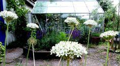 Anemone Trädgårdsdesign hjälper privatpersoner & företag i Båstad, Torekov, Bjäre & Halmstad med trädgårdsdesign & rådgivning