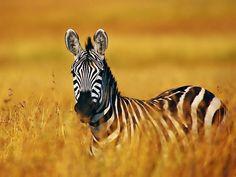15 Photos of Amazing Animals of the Savanna
