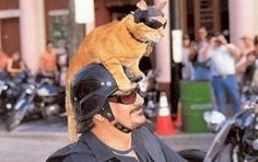 real men love cats cat rides top of motorcycle helmet     Hitchhiking Animals - Womens9