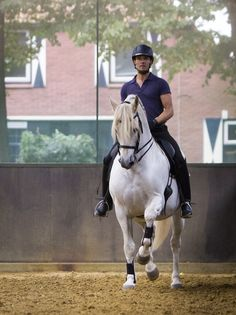 Collected trot by Bas de Recht and pré stallion Lebrero. Picture made by HUiterwaalFotografie