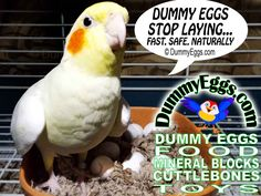 HELP BIRDS STOP LAYING... Fast, Safely, Naturally! The Secret to Dummy Eggs: Birds Count Their Eggs. Replace Clutch +1 Extra  DETAILED INSTRUCTIONS INCLUDED. FILL NEST WITH DUMMY EGGS & YOUR HEN WILL STOP LAYING MORE EGGS! REPLACE LIVE NEST EGGS with DUMMY EGGS  Realistic ,designed & manufactured USA exclusively DummyEggs.com  All size fake bird eggs: Cockatiel Egg, Conure Egg, Parakeet Egg, Parrot Egg, Finch Egg, African Grey Egg, Eclectus Egg, Lovebird Egg, Macaw Egg, Cockatoo Egg, Caique…