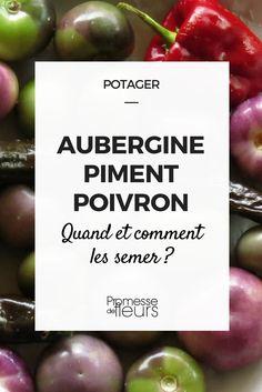 Les semis d\'aubergine, piment et poivrons se font en février mars, au chaud, à la maison et s\'installent en mai au potager. Nos conseils !