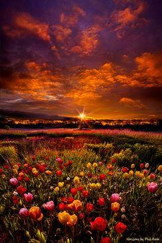 """Sunset in tulip field, Wisconsin. Dizem os especialistas: O Sol UVB """"meio-dia"""" é que absorve o hormônio D3, junto com a vitam. K2. O sol se auto-regula, e para cada pessoa um tempo mínimo de exposição. Alguns filtros solares, com seus inúmeros componentes químicos, está associado a muitos cânceres. O complemento Vitam. D p Idosos é fundamental pq precisam de 4x. O Sol evita inúmeros tipos de doenças, e no passado sempre foi reverenciado. VIVA o ASTRO-REI!"""