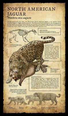 Design and Illustration for Pleistocene (Ice Age) specimens and fossils, natural history museum signage. Prehistoric Wildlife, Prehistoric World, Prehistoric Creatures, Mythical Creatures, Extinct Animals, Animal Facts, Tyrannosaurus, Animal Drawings, Mammals