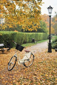 #bikes #fall | Make Life Easier
