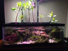 Mangrove tank - Page 11 - Reef Central Online Community