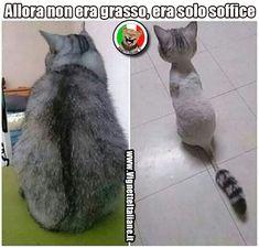 Allora non era grasso, era solo soffice. (www.VignetteItaliane.it)