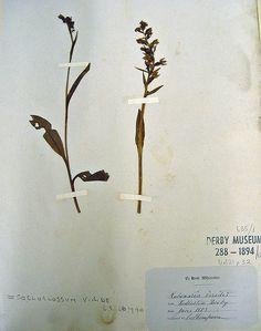 herbarium specimen 1853
