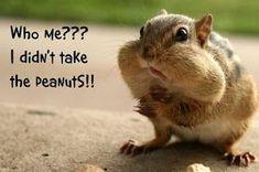 Top 13 funny wild animals pictures, funny wild animal pictures with captions Funny Wild Animals, Wild Animals Pictures, Baby Animals, Cute Animals, Funny Squirrel Pictures, Funny Animal Pictures, Animal Antics, Animal Memes, Animal Sayings