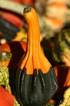 How to Preserve Decorative Gourds