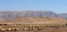 öffentliche Angelegenheiten: Antike Stadt im irakischen Kurdistan entdeckt.