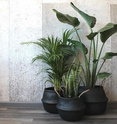 Barro Basket Black is part of Living room plants decor - Barro is a Spanish word meaning 'mud', but it's not just their name that makes these baskets so exotic They've been handwoven out of seagrass Living Room Plants Decor, House Plants Decor, Patio Plants, Plant Decor, Indoor Plants, Inside Plants, Cool Plants, Plantas Indoor, Decoration Plante