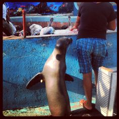 Muelle Santa Cruz galápagos Ecuador  La mascota lobo marino cómelon