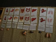 Work with organs - Free cards to download for use with any human body mannequin.