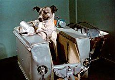 Laika, il primo animale in orbita attorno alla Terra. Tuttavia, Laika non fu il primo animale nello spazio. Gli Stati Uniti e l'Unione Sovietica avevano ...
