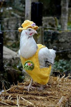 Easter Chicken Coats with Matching Hats by mypdfpatterns - Craftsy