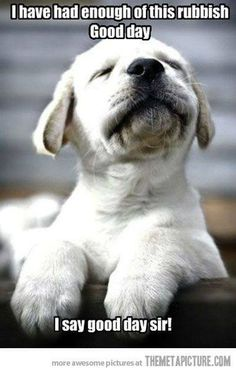 I have had enough of this rubbish Good day  I say good day sir!  -photo credit to the owner #dogs #cats