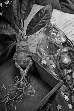 Find images and videos about harry potter, hogwarts and herbology on We Heart It - the app to get lost in what you love. Images Harry Potter, Theme Harry Potter, Harry Potter World, Harry Potter Props, Mandrake Root, Anniversaire Harry Potter, Neville Longbottom, Magical Creatures, Deadly Creatures