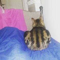 #pisolino del #gatto #pomeridiano #cat #love #bed #letto #insieme #together #mummi #domenica #riposo