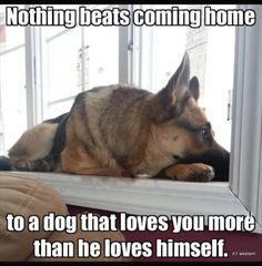 Wicked Training Your German Shepherd Dog Ideas. Mind Blowing Training Your German Shepherd Dog Ideas. Amor Animal, Mundo Animal, I Love Dogs, Cute Dogs, German Shepherd Puppies, German Shepherds, Yorkshire Terrier Puppies, Schaefer, Dog Quotes