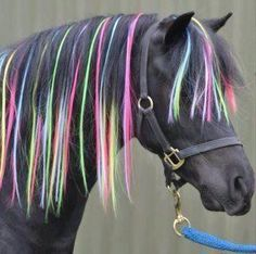 Pretty Cool Horse Color ☀opawz.com supply pet hair dye,pet hair chalk,pet perfume,pet shampoo,spa....