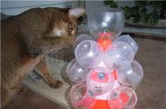 Cat feeder using plastic yoghurt pots